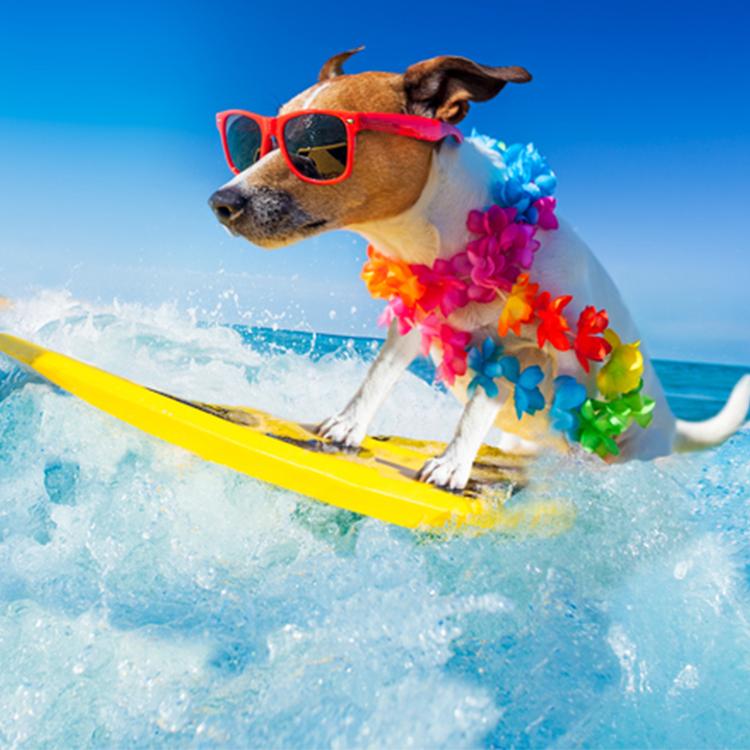 festas-surf-giraventoseventos
